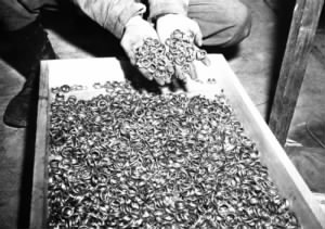 Holocaust victim's wedding rings.jpg